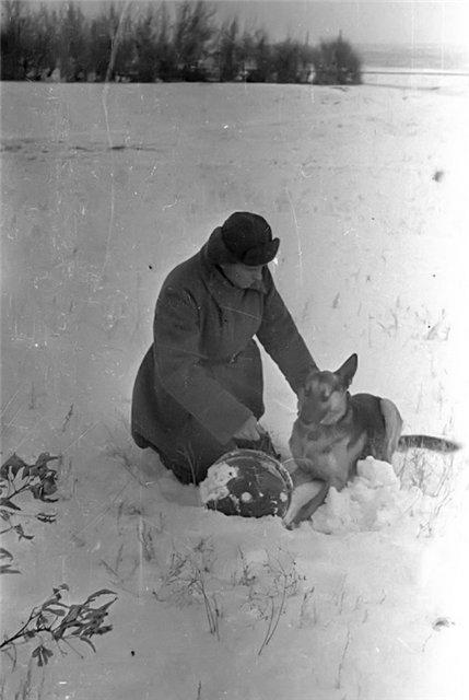 Собаки Великой Отечественной войны 191496095c6c