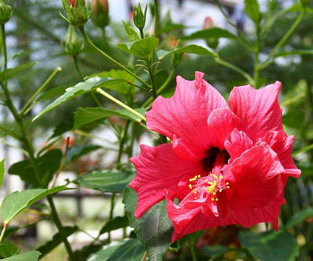 Экскурсия по Ботаническому Саду 9c3627c6d93d
