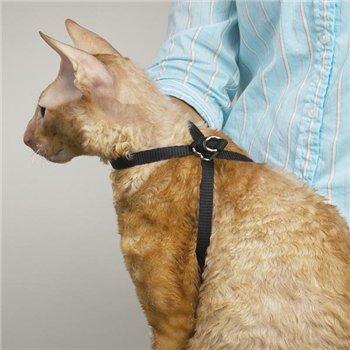 Интернет-зоомагазин Pet Gear Ceb7894faaf5