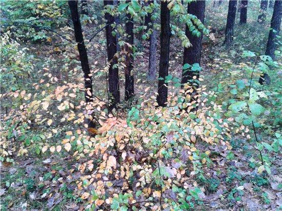 Осень, осень ... как ты хороша...( наше фотонастроение) - Страница 5 0da65d00d471