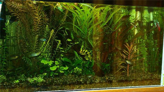 Дебри моих аквариумов Da4116a89295