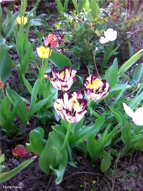 Конкурс Весна-Весна!!! 38391f252d11