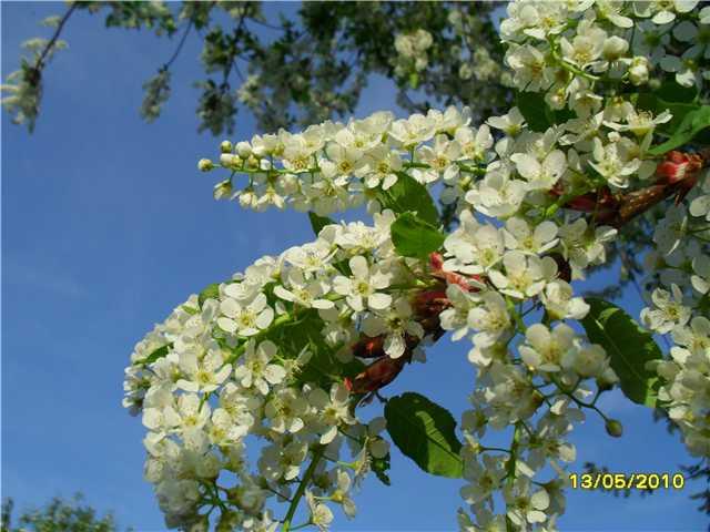 Конкурс Весна-Весна!!! 170e2ee805f7