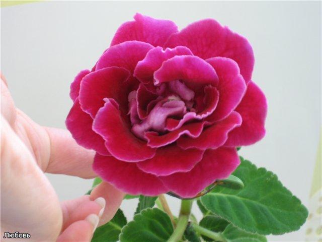 Мои цветики-семицветики - Страница 2 A1ca389d791e