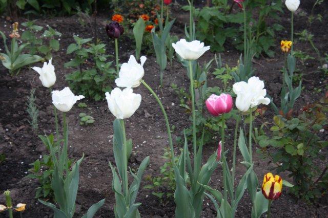 Растения от FILIGERa - Страница 2 652fb4c12e99