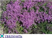 Растения для альпийской горки. - Страница 2 1287e8d637e4t