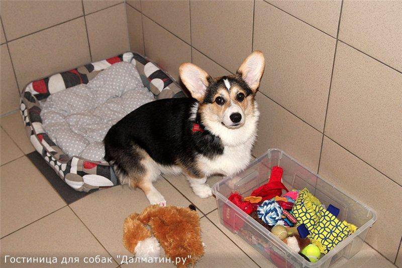 Семейная гостиница для собак в Дедовске (передержка) 3ef29193d2bb