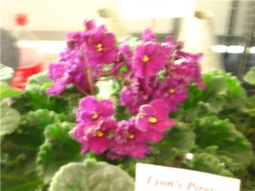 Ландшафт и приусадебное хозяйство - Весна 2009. - Страница 2 7a99d2fc8890