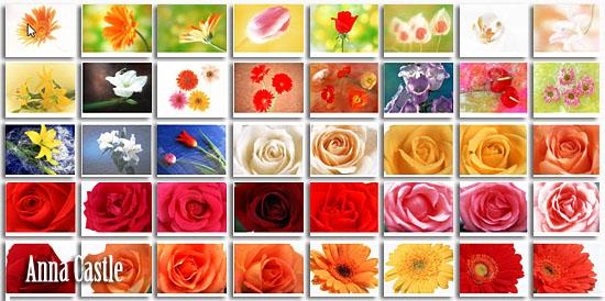 Клипарты  ::  Цветы-разные 9c5ff936011e