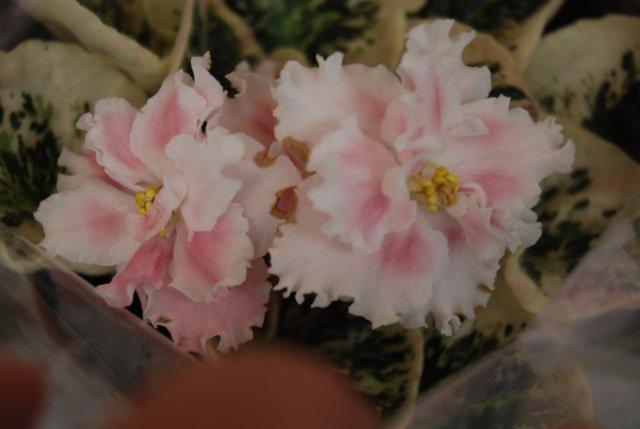 Международая выставка «Цветы.Ландшафт .Усадьба 2010» Астана - Страница 3 C0c77bf1e7fb