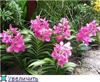 Парк орхидей в Ботаническом саду Сингапура. 5890428c74d6t