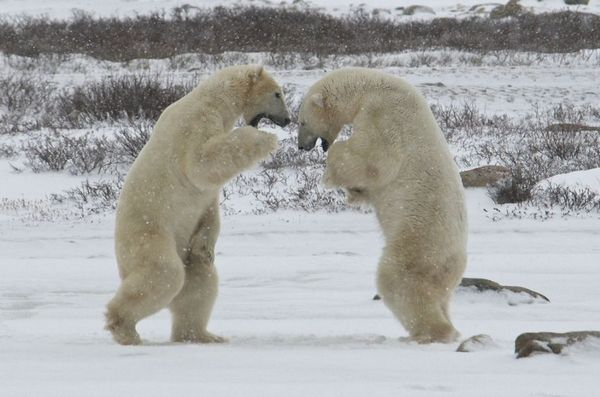 Ничто человеческое медведям не чуждо 6d61cb2d8a07