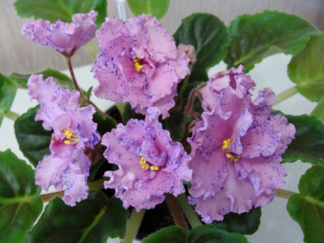 Мои цветочки - Страница 13 A16648fad3c4