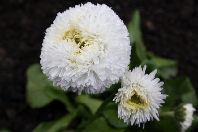 Растения от FILIGERa - Страница 2 C3b5cb83b19a