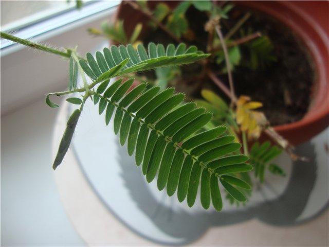 что я вырастила из семян - Страница 4 Bbf632105002