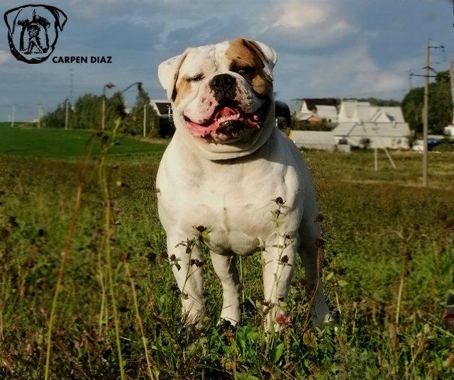 Собаки питомника Carpen Diaz - Страница 2 3a89ea302986