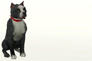 Собаки - Страница 6 530360bf6533