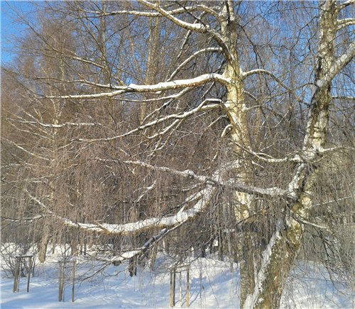 Зимняя сказка на наших фотографиях - Страница 12 D36a65e68a22