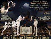 Лучшей собакой года среди собак всех пород в Германии.... 3431482cc4b3t
