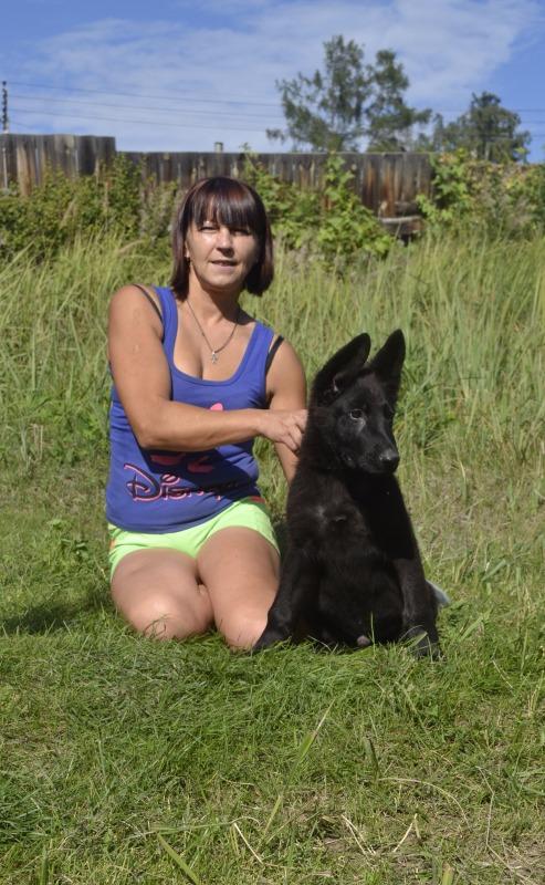 Щенки немецкой овчарки Черного окраса! 20763b925acf