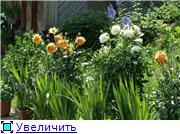 Георгины в цвету D2e8b5c20428t