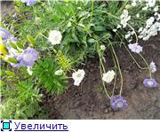 Лето в наших садах - Страница 7 E12c3e8ef174t