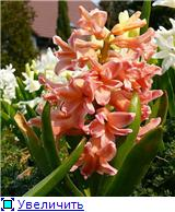 Наши домашние растения - Страница 2 930dd0292961t