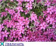 Растения для альпийской горки. 90059259684at