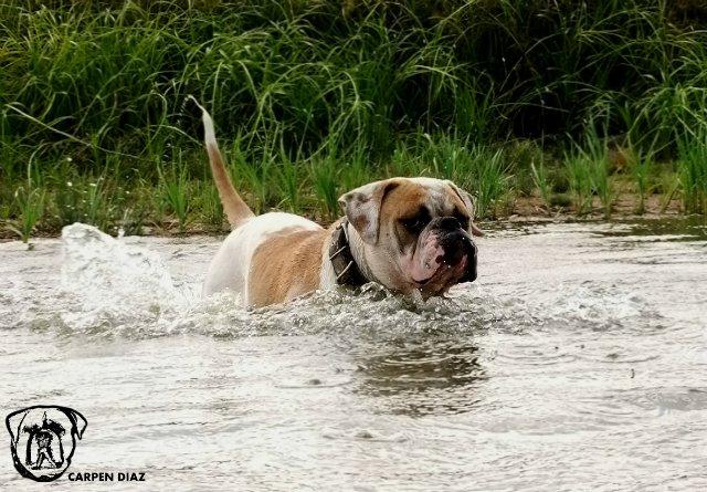 Собаки питомника Carpen Diaz - Страница 2 4bb7815a5b89