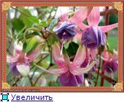 ФУКСИИ В ХАБАРОВСКЕ  - Страница 2 A45357f2bf36t