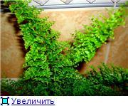 ФУКСИИ В ХАБАРОВСКЕ  - Страница 11 Ecd883604c08t