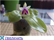 Sevgilim ( мои любимые) 38b2a2160e6et
