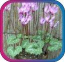 продам семена экзотических растений - Страница 3 9dce0ee03921