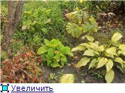 Cад Людмилы Ивановой из черкасс E8cb25d14921t
