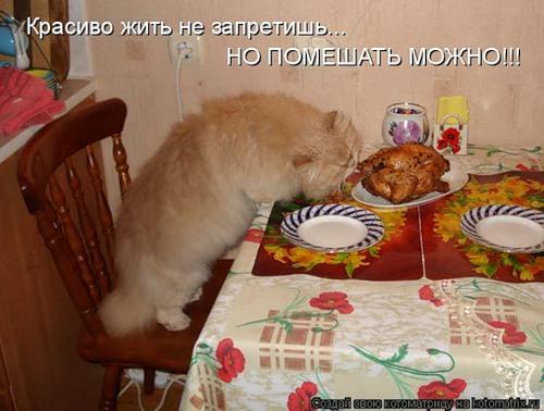 Фотографии кошек 0b24a88ddf8e