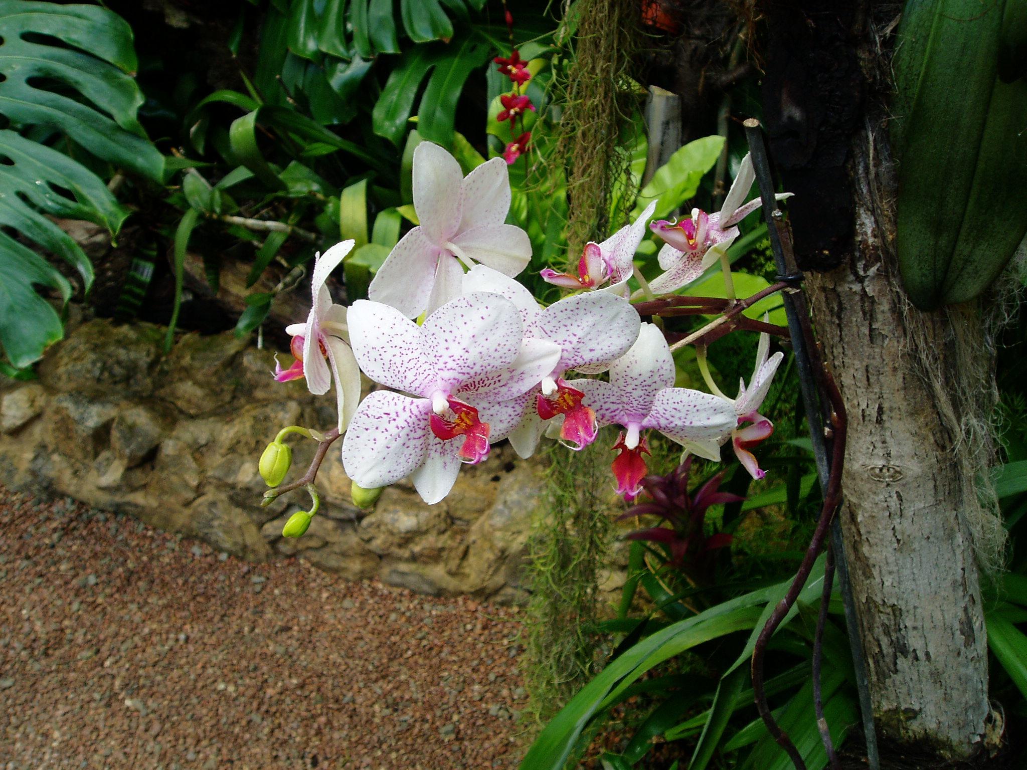 Выставка Орхидей B62fbd466dae