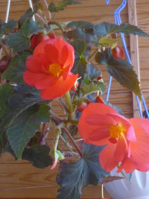 Мои любимые цветочки A0c3495a8231