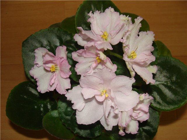 Весеннее  цветение (Хваст от Веры) - Страница 3 7249500f2180