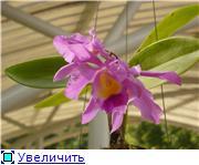 Орхидеи и прочая красота на о. Пхукет - Страница 2 99c881aa58b0t