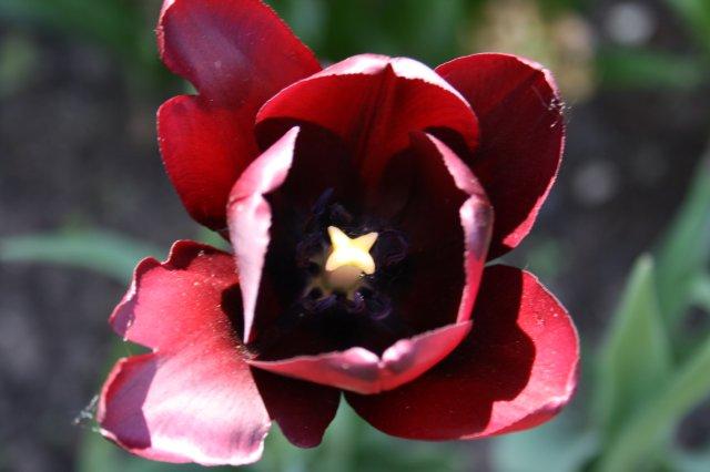 Растения от FILIGERa - Страница 2 Ed1215265285