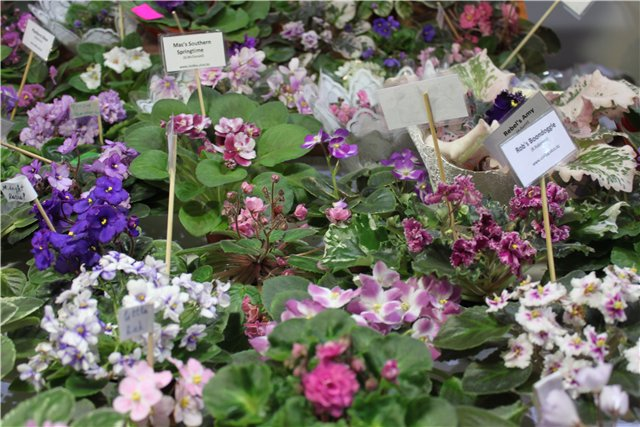 XIX Международная выставка Ландшафт и Приусадебное хозяйство-2012 4cfcfb7d13f0