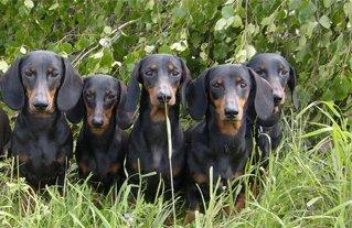 Форум о собаках