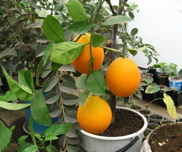 Растения из Нижегородской оранжереи 6c3485a7499e