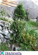 Хвойные растения и вересковые в садовом дизайне. 0799241b68cet