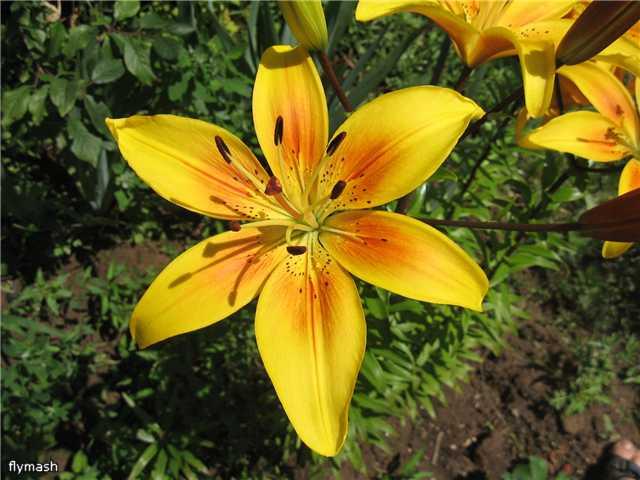 Во саду ли, в огороде... 62dac7c5f951