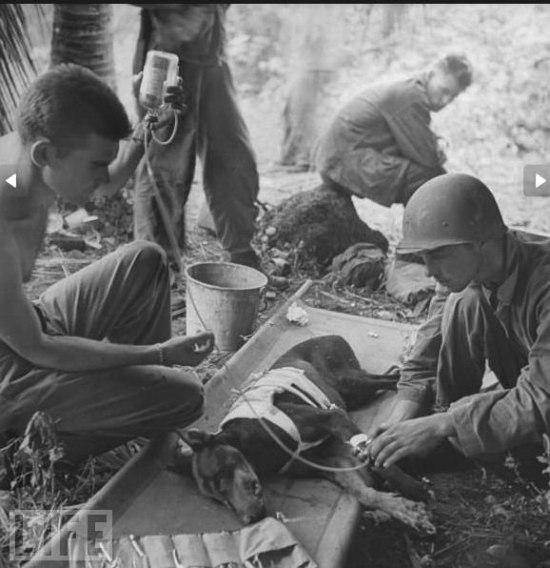 Собаки Великой Отечественной войны 9b03313750f9