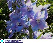 Лето в наших садах - Страница 4 Ee37682e1eabt