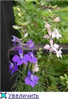 Лето в наших садах - Страница 5 4c3638c20cb8t