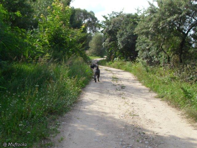 Наши собаки, друзья и гости, кот Мензурка A01796a518a4