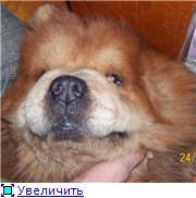 Моя собачка C34f442f6caat